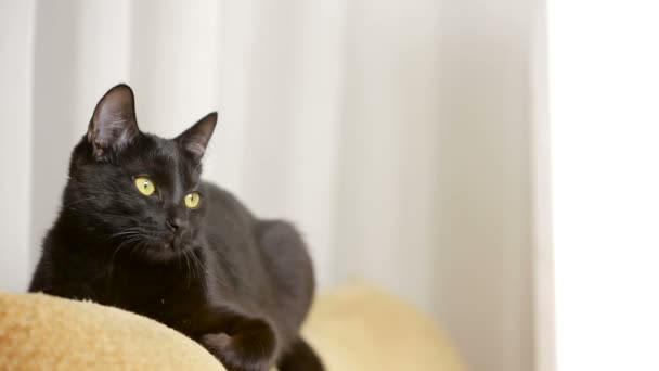 noir chatte fermer vidéos