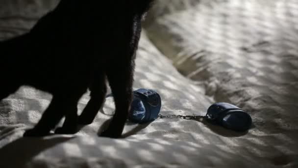 zwarte kat Sex