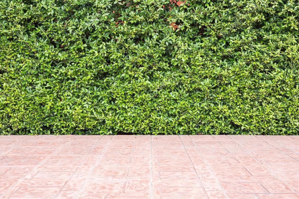 Piastrella per pavimento e reticolo di verde struttura della