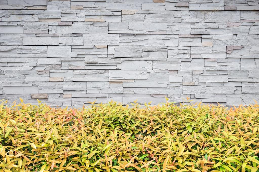 Young green plant. Garden decorative and stone wall background ...