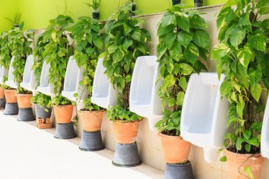 Modern Mens toilets with green plant