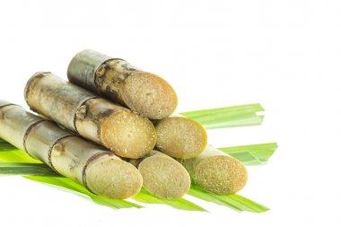 Cut green sugarcane