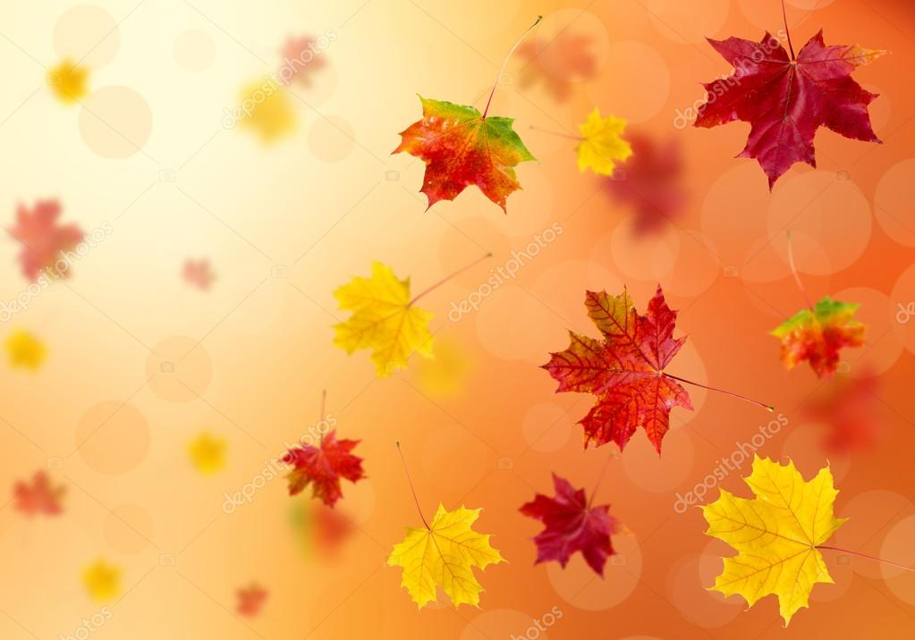 3D leaves — Stock Photo © 02irina #73657323