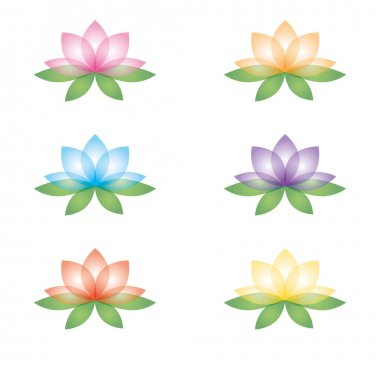 Set of lotus flowers on a white background