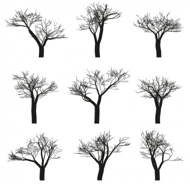 Trees set vector isolated objects