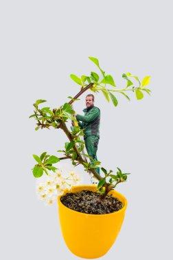 Man bonsai tree