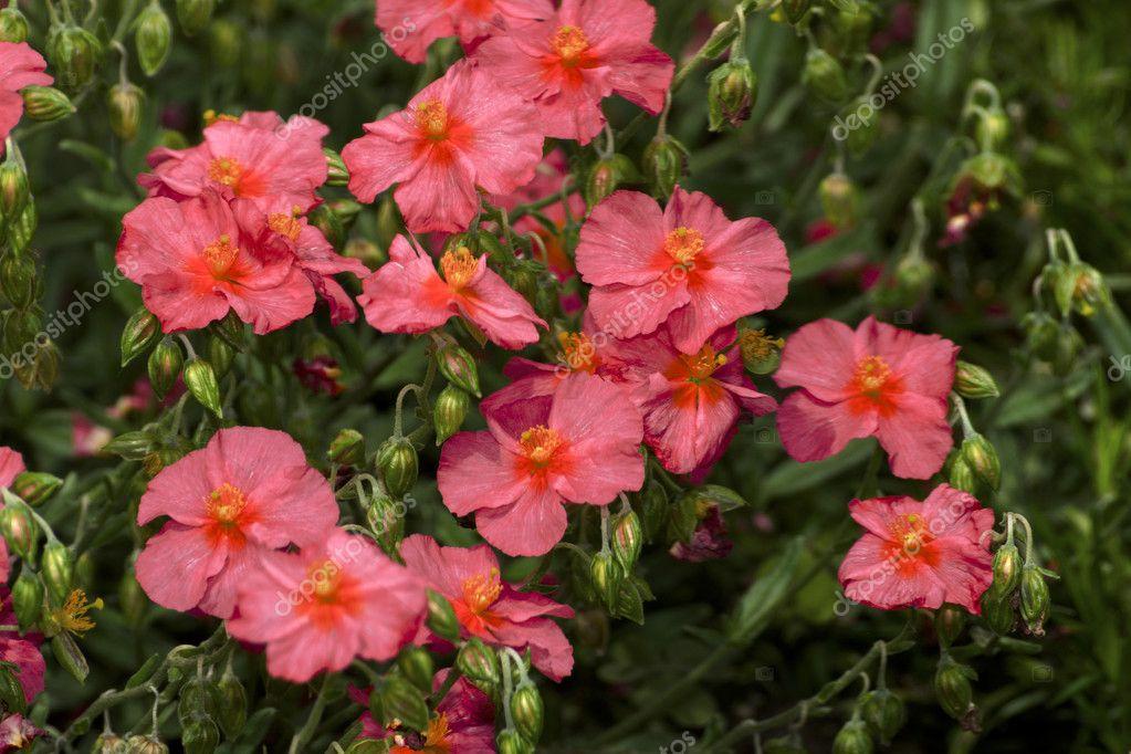 Fleur dans le jardin d\'ornement — Photographie Tylinek ...