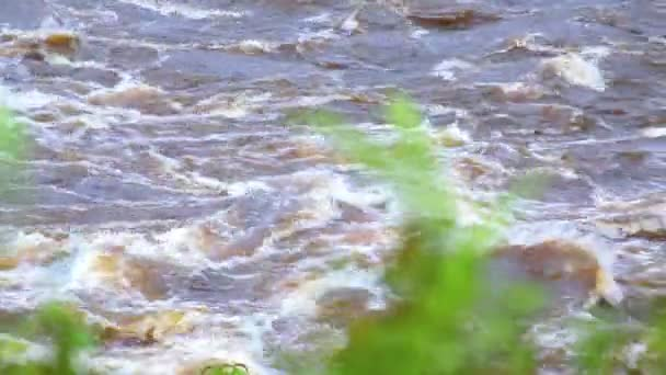 River in Africa. Shifting the focus of the camera with a powerful flow of the river on the leaves of plants