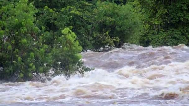 Tropické řeky povodně v africké džungli, close-up, Rovníková Guinea