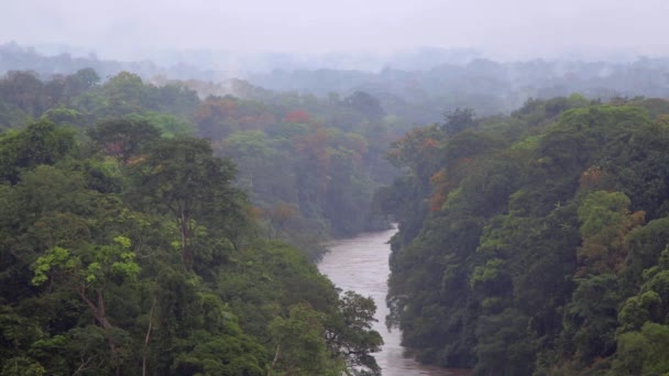 Nice view of the river in the tropical jungles of Africa