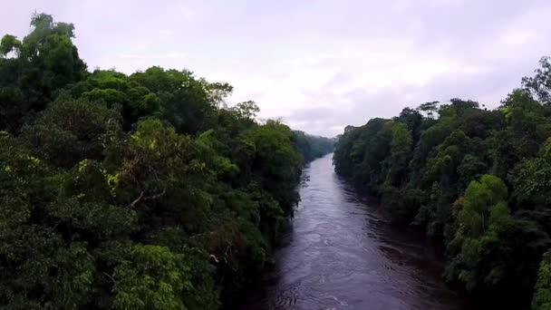 Fluss im Regenwald. Kamera wandert in den Fluss
