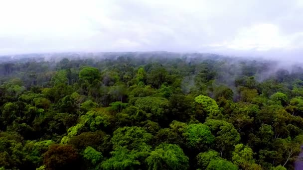 The camera slowly flying over the tree tops of the rainforest