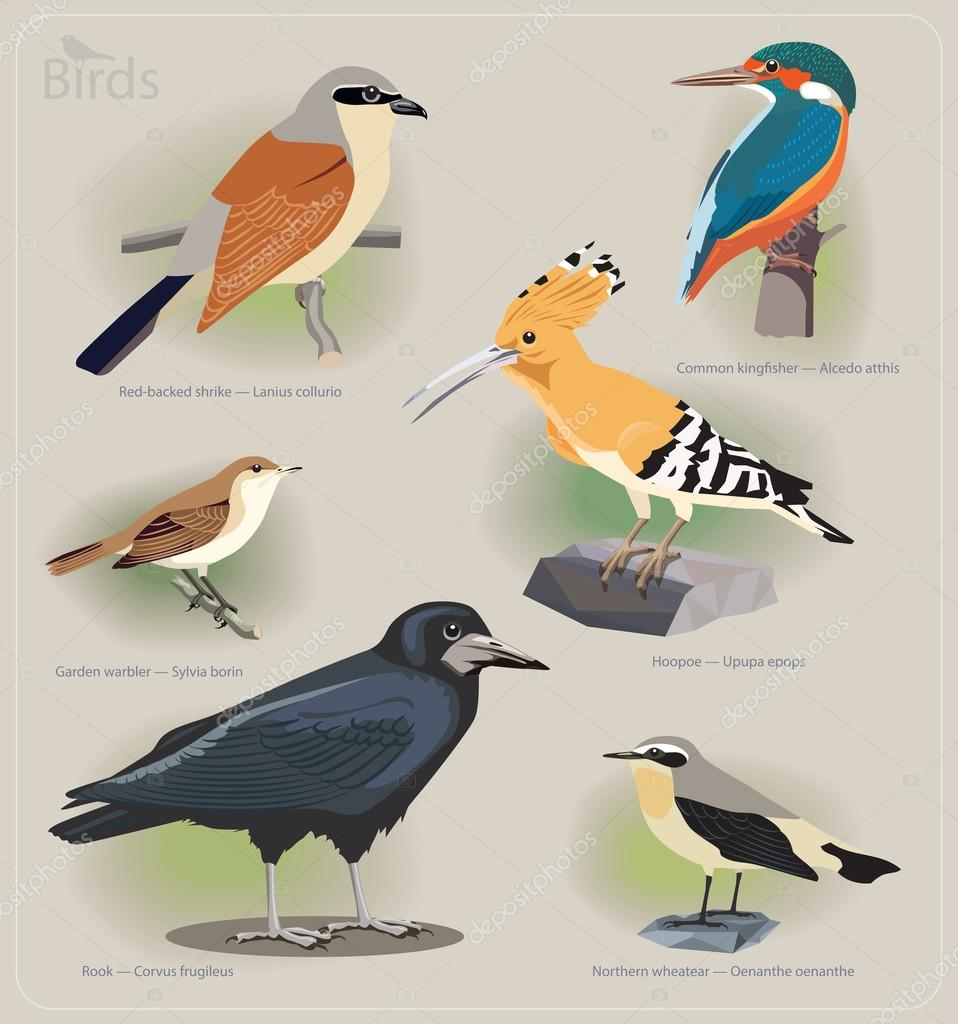 Image set of birds: red-backed shrike, common kingfisher, garden warbler, hoopoe, rook, northern wheatear
