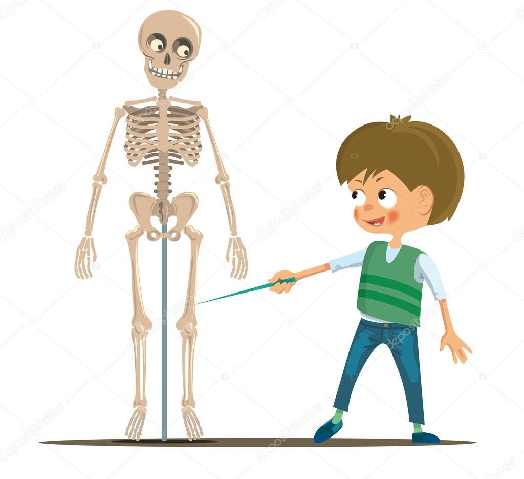 Junge in der Schule studieren das menschliche Skelett — Stockvektor ...