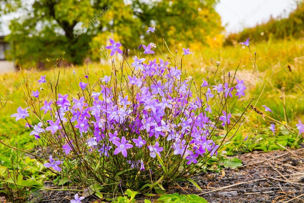 Violets on the green grass