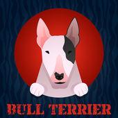 Bull teriér