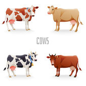 Different cows