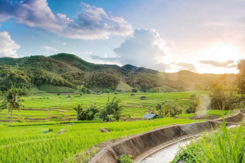 Arrozales En Terrazas De Ban Kong Kan Maechaem Chiangmai