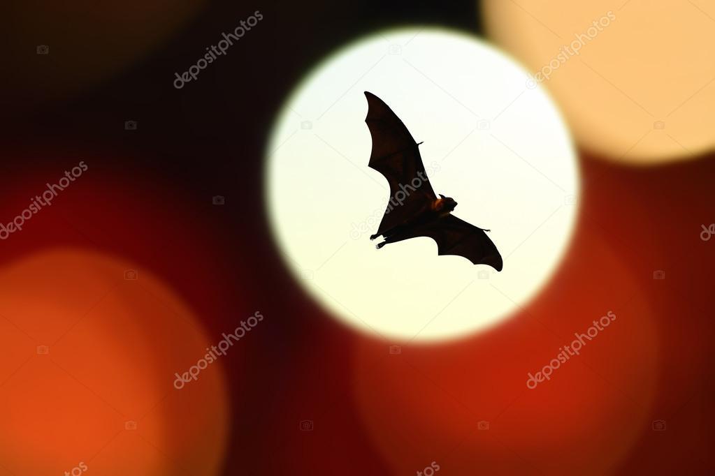 Sagome di pipistrello con illuminazione colorata festival di