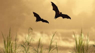 Bat silhouettes in sunset time