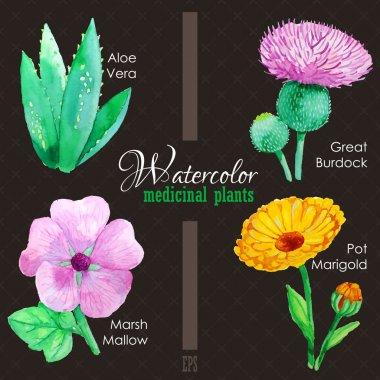 Set of watercolor madicinal plants
