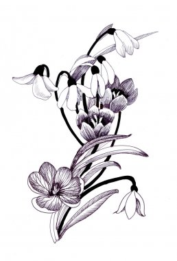 sketched snowdrops flowers