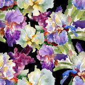 Akvarel kvetoucí květiny iris