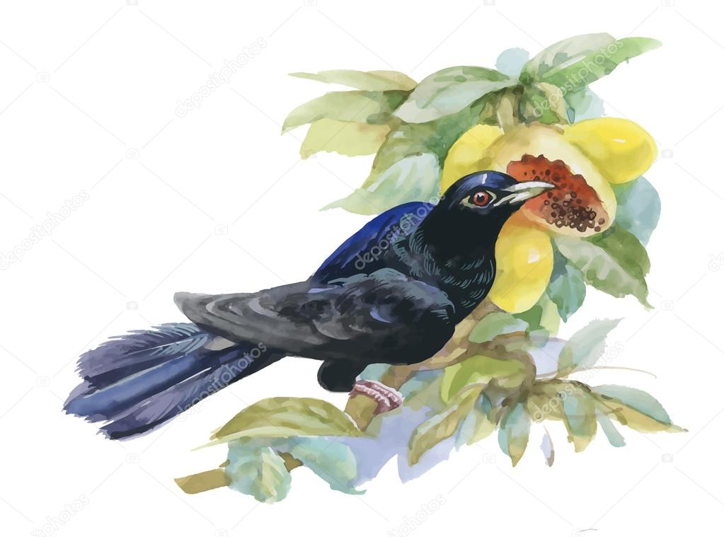 Watercolor exotic bird and tropical fruits illustration.
