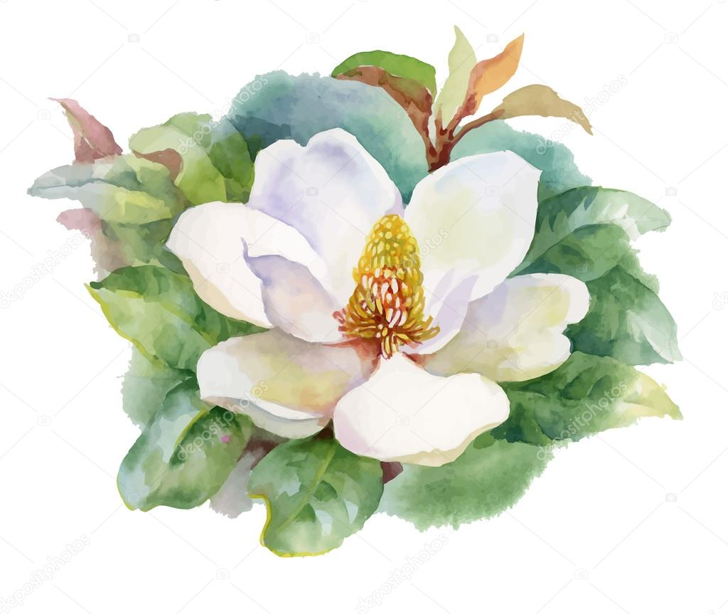 Watercolor Summer blooming white magnolia flower.