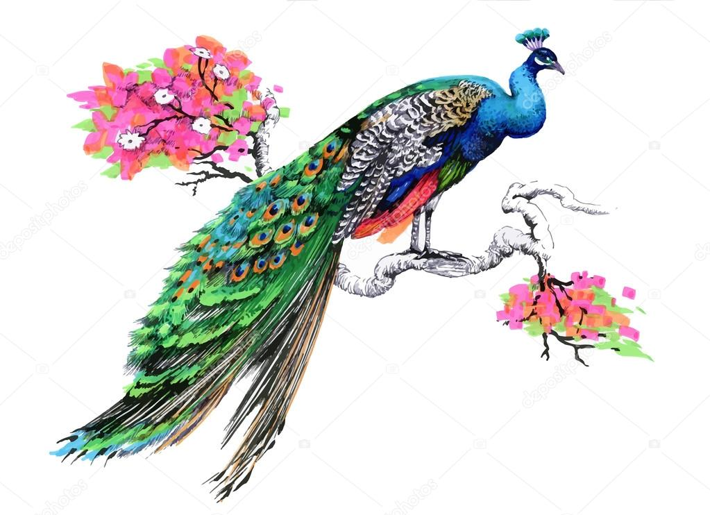 Peacock on blooming tree branch