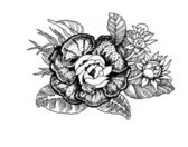ručně tažené květiny