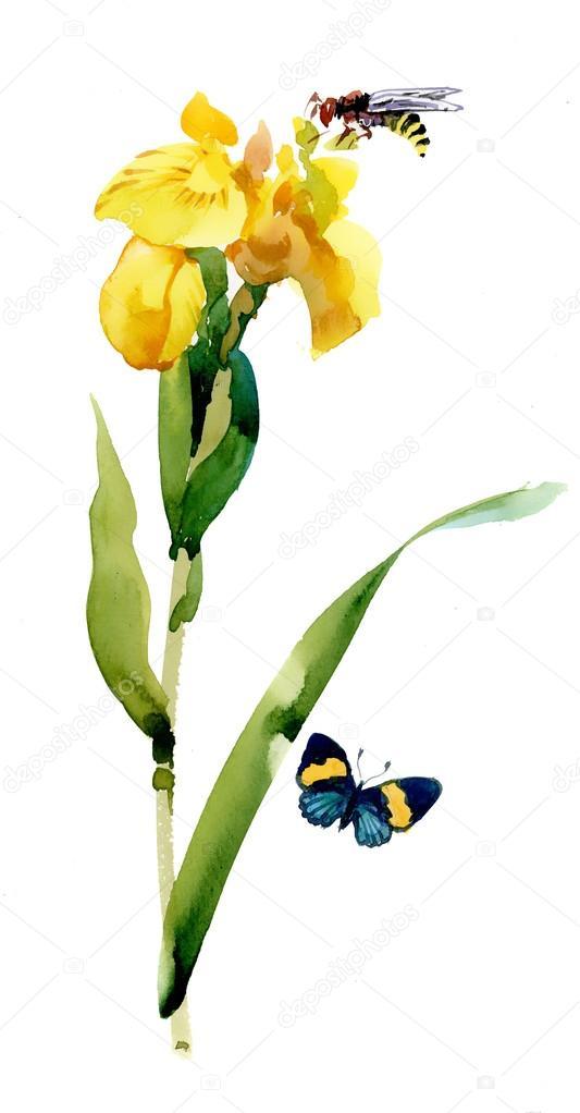 Соты пчел фото  animalsfotocom