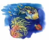 Fotografie Mořský život s tropické ryby