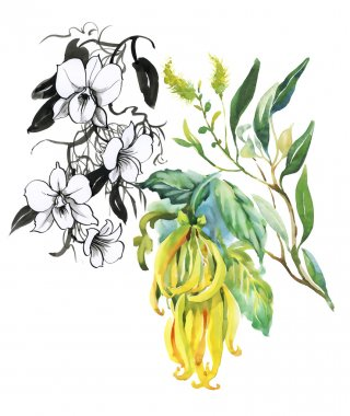 Watercolor illustration of tropical flowers