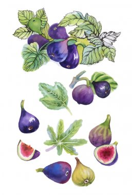 Watercolor set of figs on white background