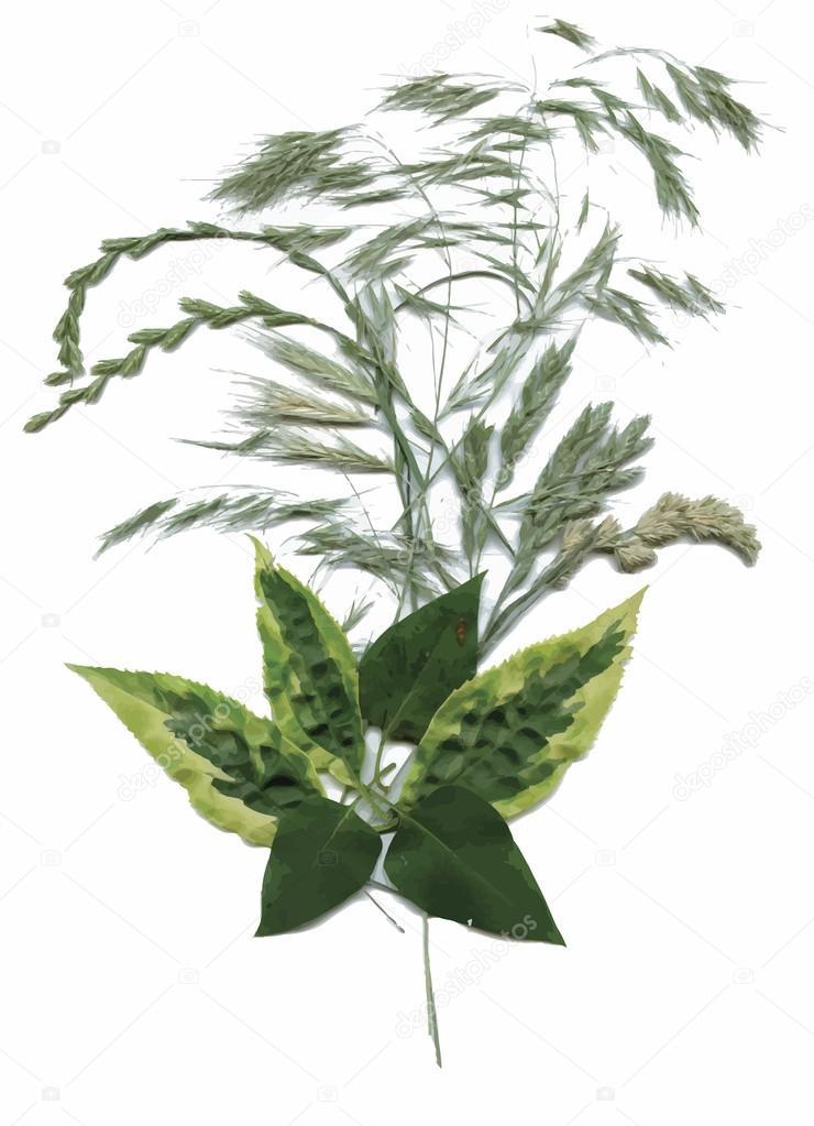 Pflanzen Trocknen herbarium pflanzen zu trocknen blumen und blätter vektor abbildung