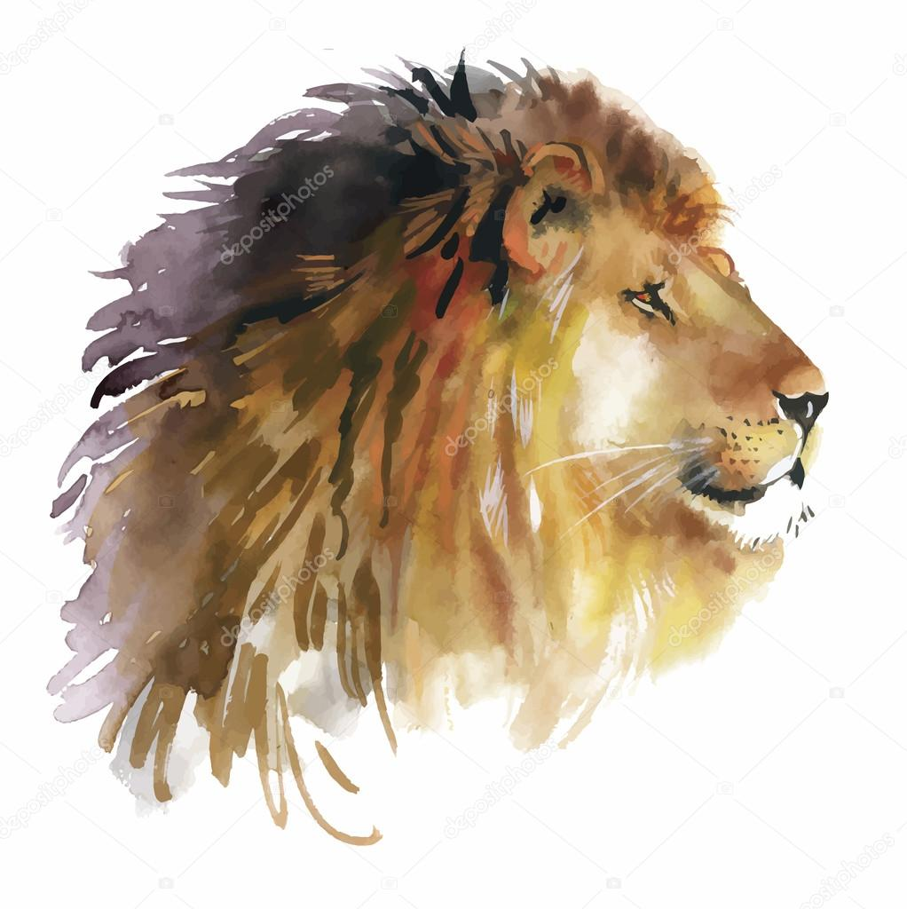 León acuarela en un vector de fondo blanco — Archivo