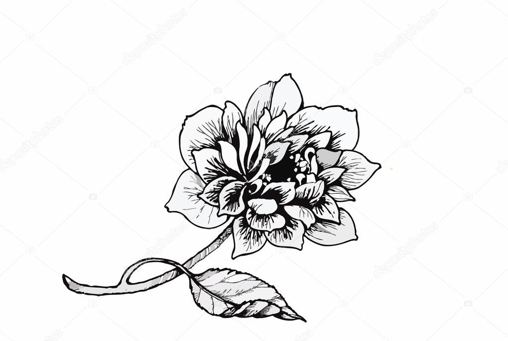 Beautiful monochrome, black and white flower isolated. Hand-drawn contour lines strokes.