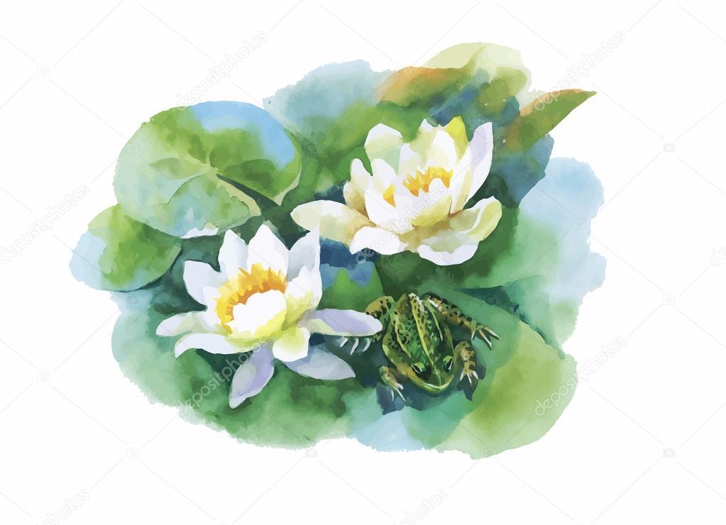 Dessin de fleurs aquarelle n nuphar blanc avec grenouille sur illustration vectorielle tang - Nenuphar dessin ...