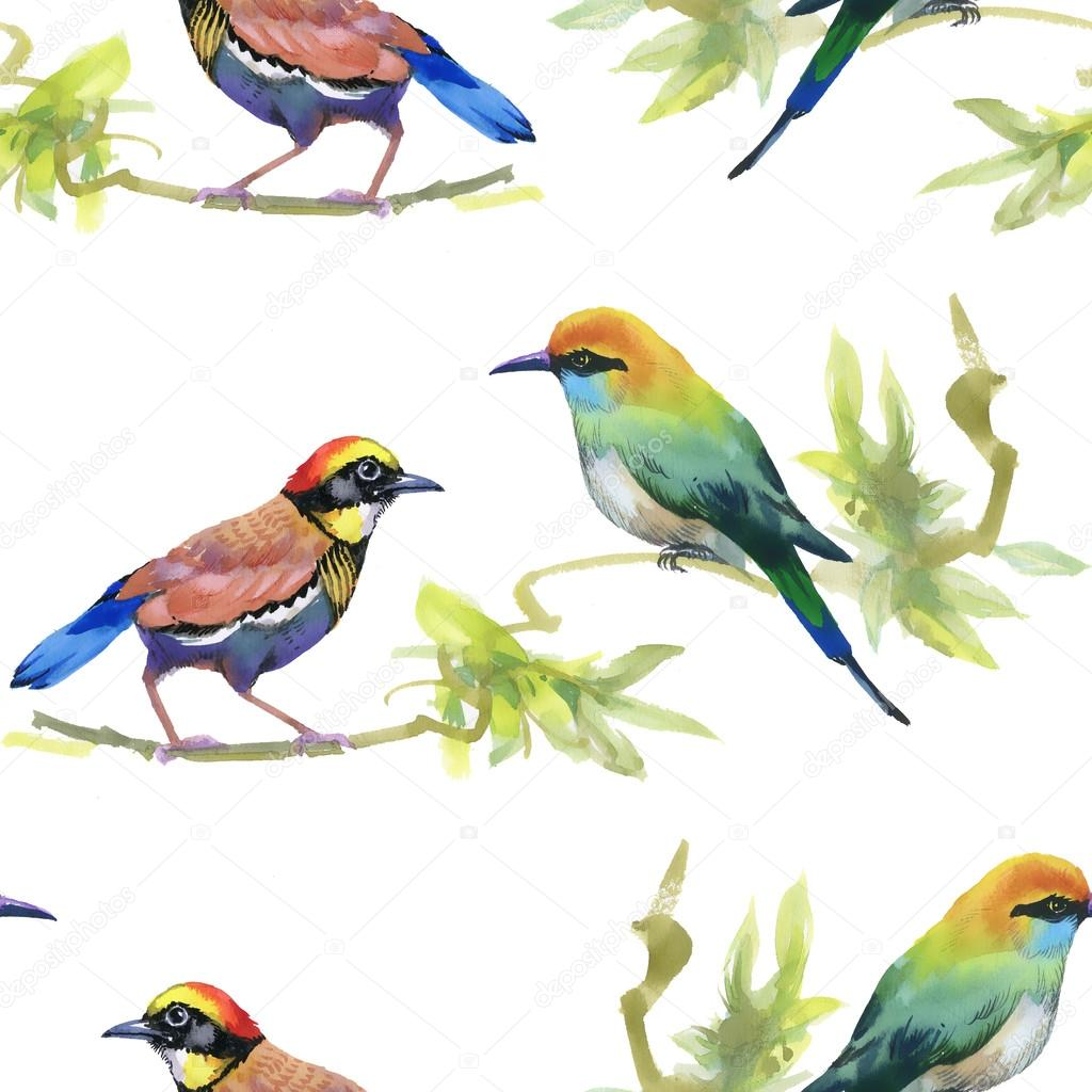 Watercolor Colorful Birds Stock Photo C Kostan Proff 86308026