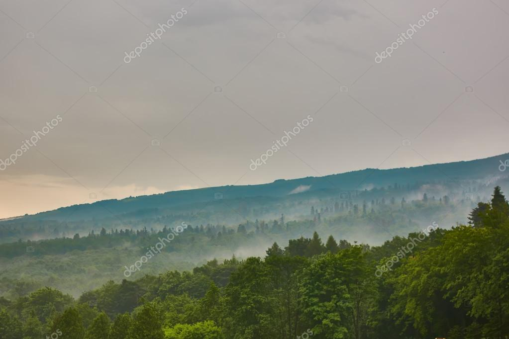 Фотообои Forested mountain slope in low lying cloud with the evergreen conifers