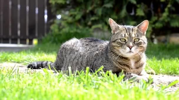 Grey cute cat lying on the garden