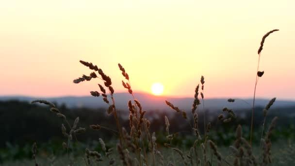 východ slunce v oboru