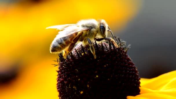 Bee pollen összegyűjti
