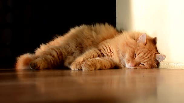 Beautiful domestic ginger cat sleeping.