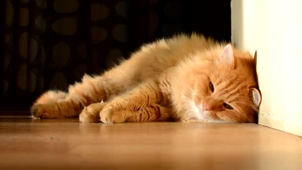 schöne häusliche Ingwerkatze schläft.