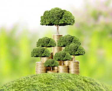 money tree growing from money