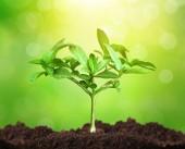 Růst stromů