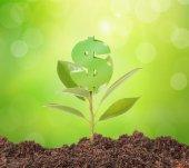 Peníze rostou na stromě