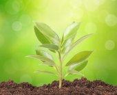 Zelený výhonek roste fro